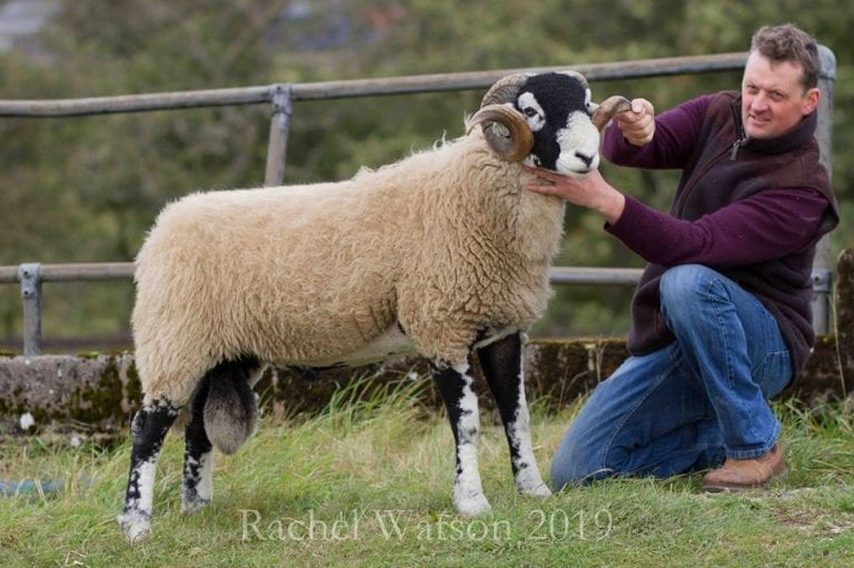 'A' District Ram Sale – Aged, Shearling & Ram Lambs