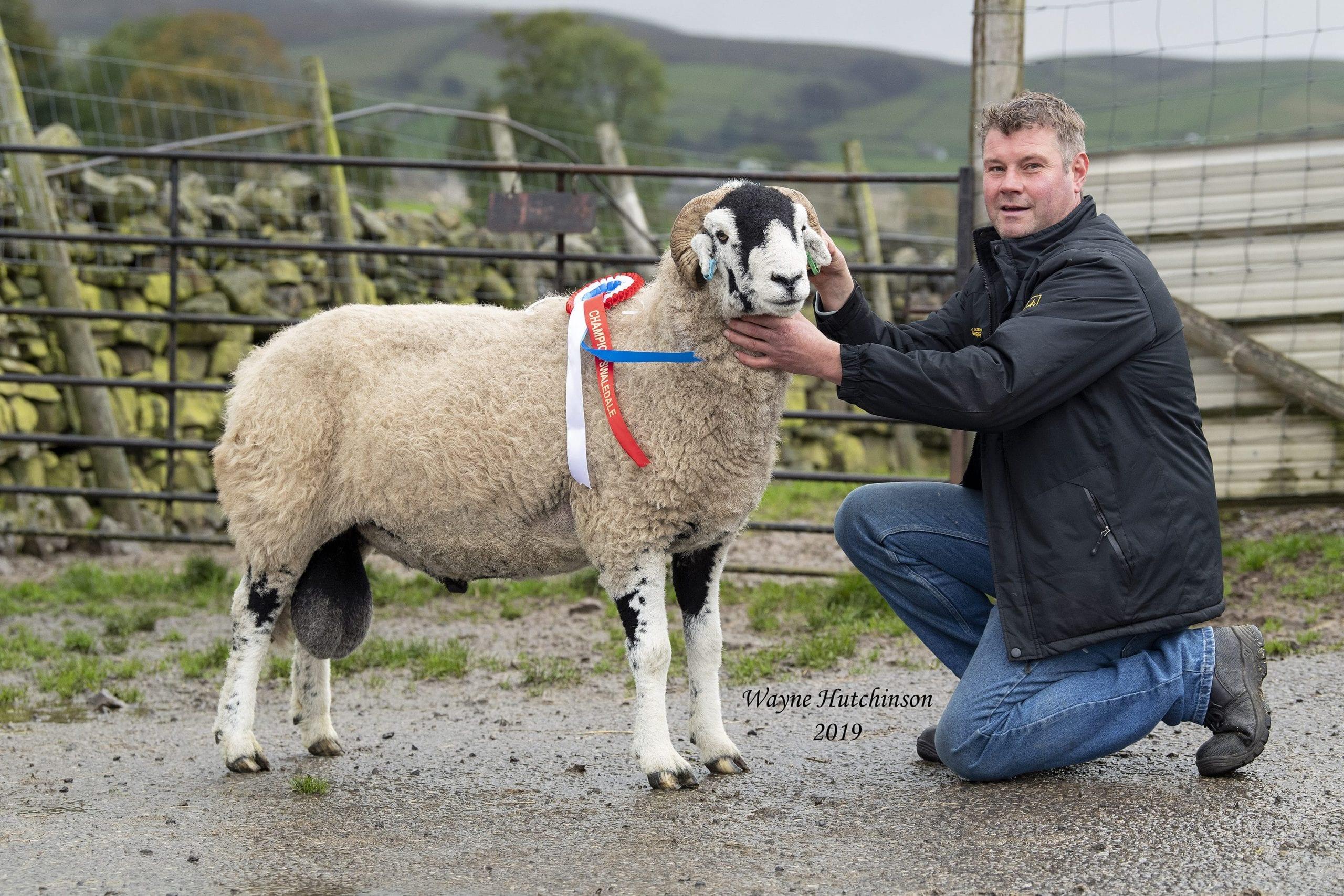 'B' District Ram Sales – Aged Rams & Ram Lambs