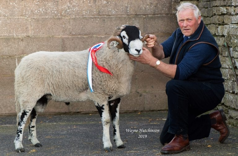 'C' District Ram Sales – Shearling Rams – Day 1