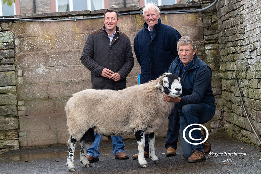 'C' District Ram Sales – Aged Rams & Ram Lambs