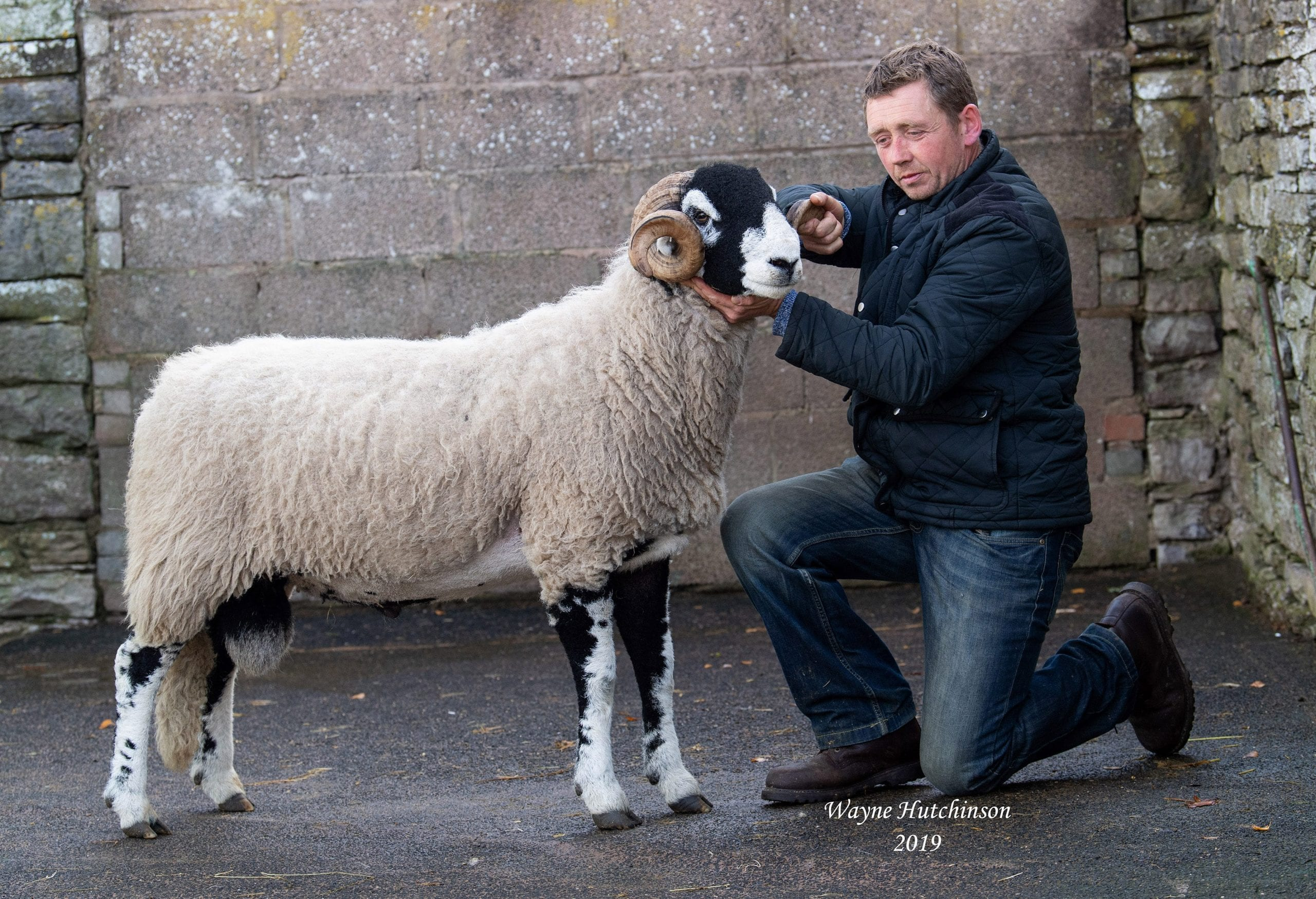 Kirkby Stephen – Shearling Rams – Friday
