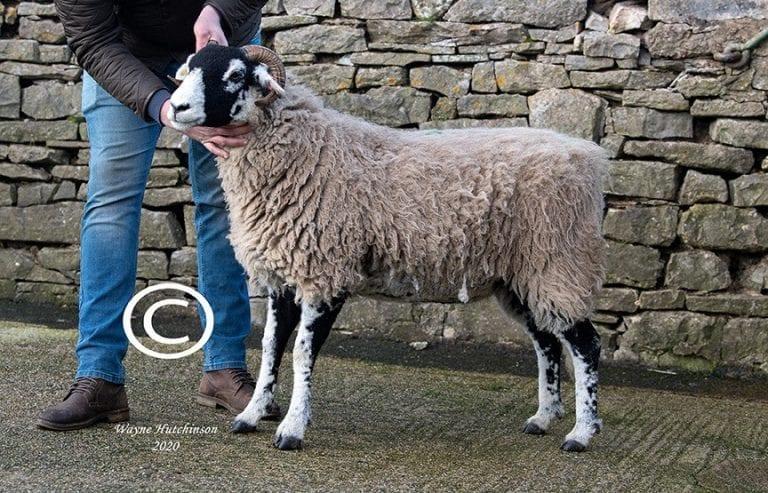 Kirkby Stephen Inlamb & Empty Ewe Hogg Sale