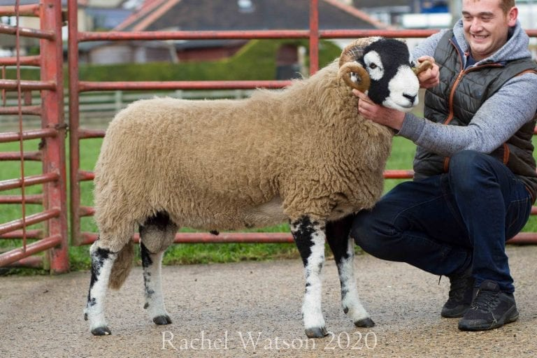D District Ram Sale – 13th October 2020