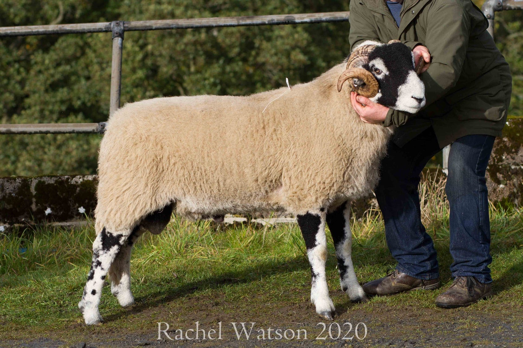 A District Ram Sale – 14th October 2020