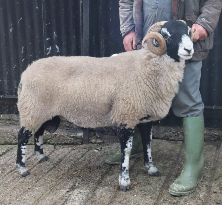 E District Ram Sale – 9th October 2020