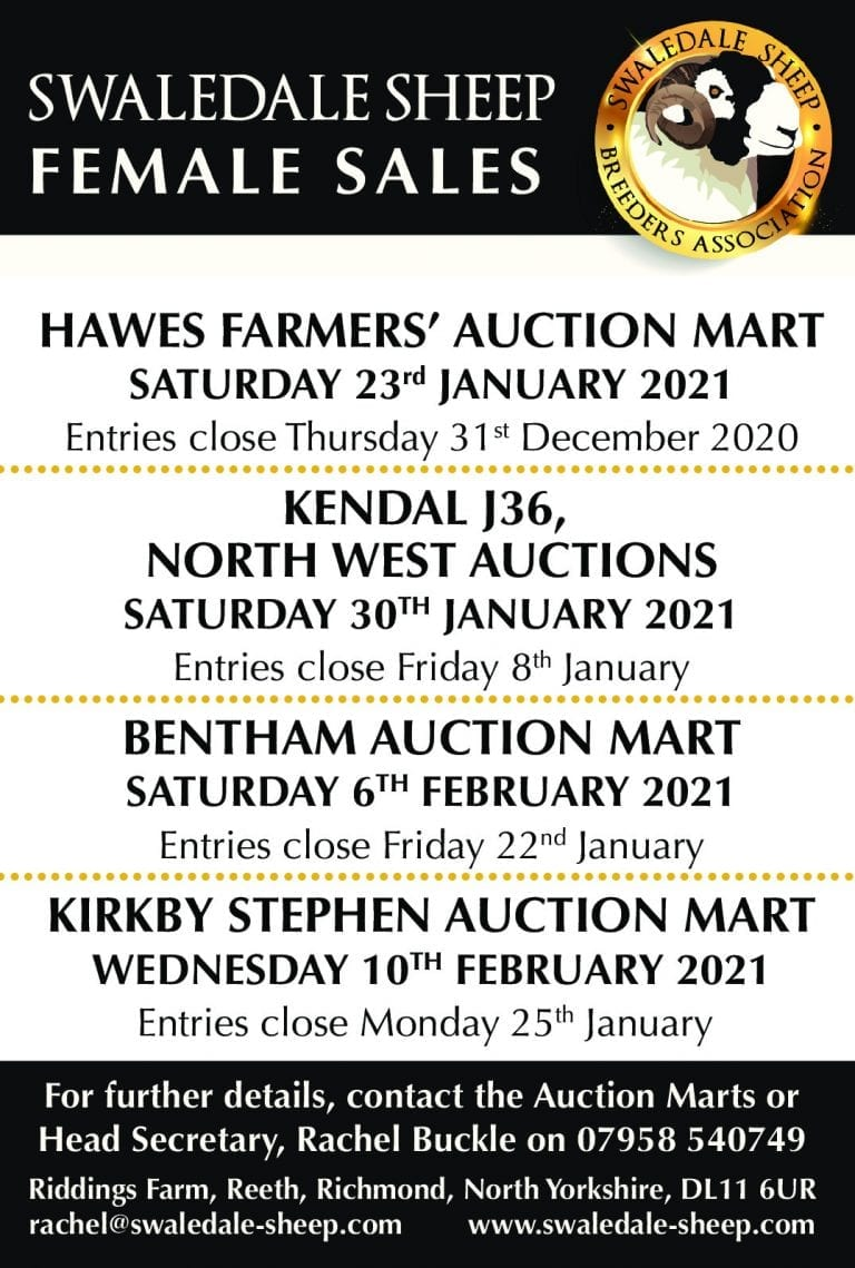 Inlamb & Empty Ewe Hogg Sales