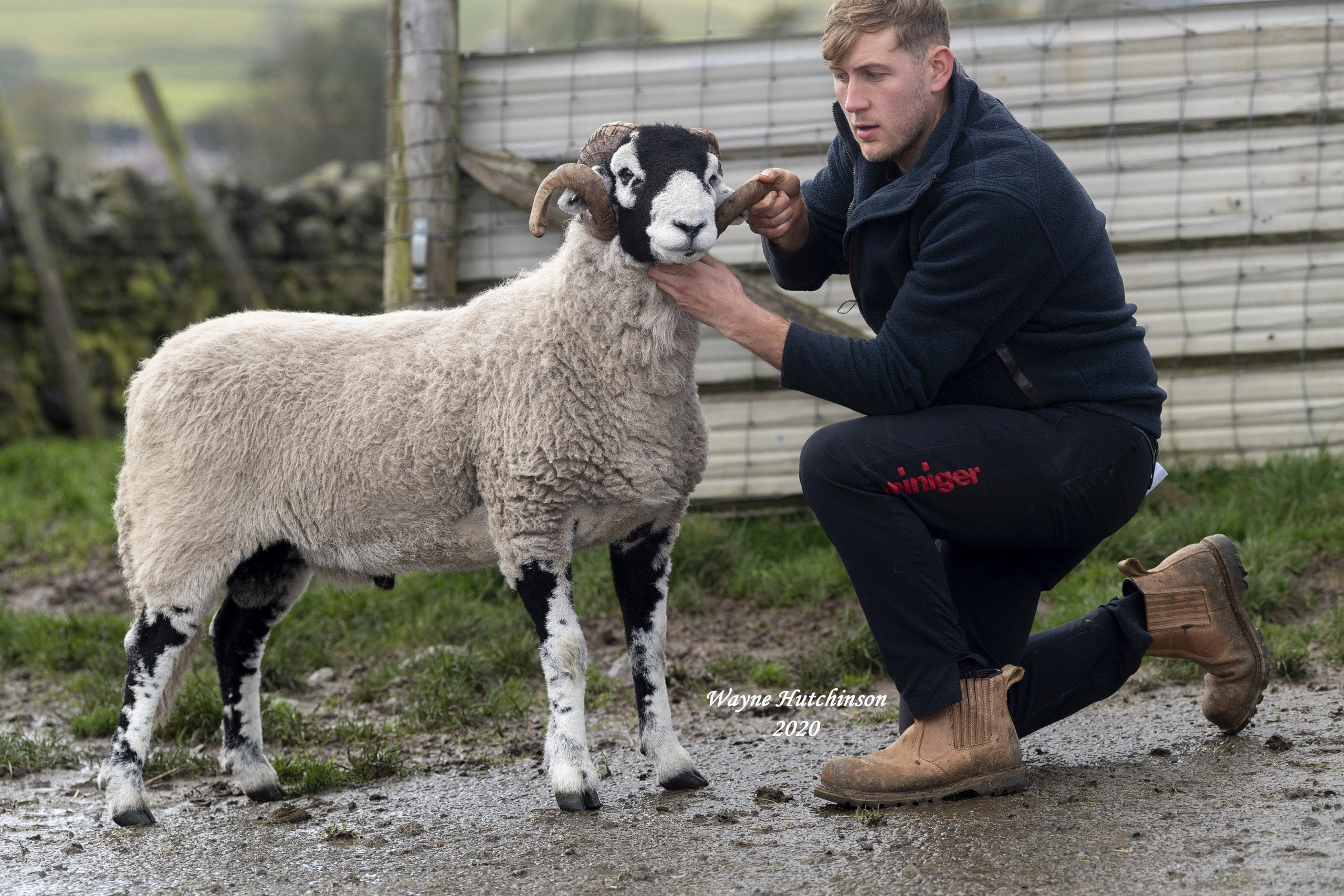 B District Shearling Rams Day 1 – 28th October 2020