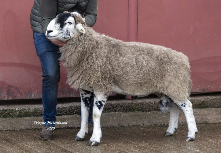 C District Ram Sales – Aged & Ram Lambs – 21st October 2020