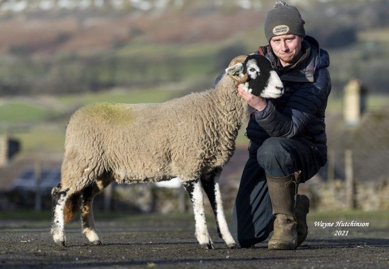 Hawes inlamb & empty ewe hogg sale