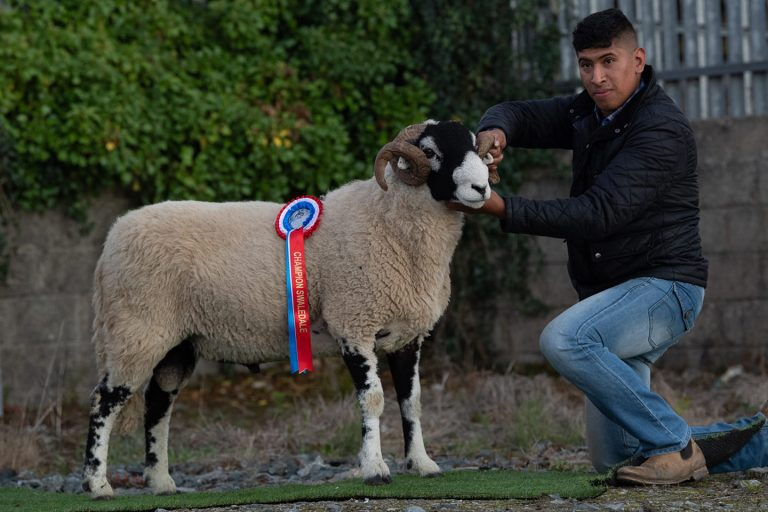 South of Ireland Sale Report